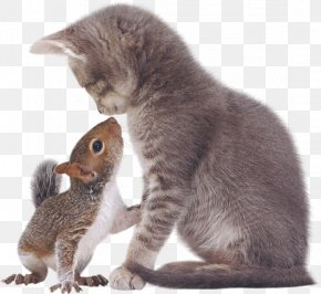 Squirrel - Eastern Gray Squirrel Tabby Cat Kitten PNG