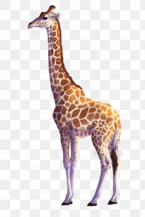 Giraffe - Giraffe PNG