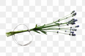 Bouquet - Twig PNG