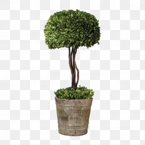 Plant - Box Tree Topiary Hedge Evergreen PNG