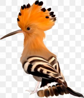 Hand-painted Albatross - Lovebird Africa Wildlife Hoopoe PNG