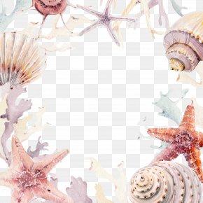 Conch Coral - Wedding Invitation Seashell Beach Convite PNG