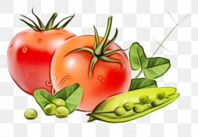 Plum Tomato Cherry Tomatoes - Tomato Cartoon PNG