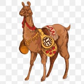 Camel Cartoon - Dromedary Llama Guanaco Drawing PNG