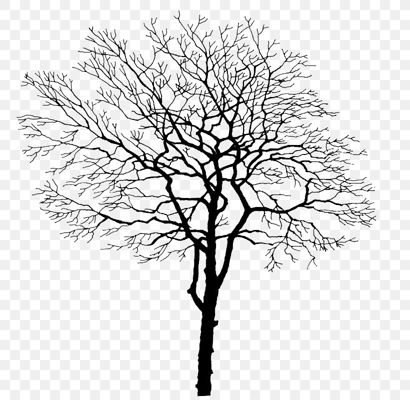 Tree Branch Trunk, PNG, 800x800px, Tree, Black And White, Branch, Computer Graphics, Computer Software Download Free