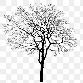 Tree Branches - Tree Branch Trunk PNG