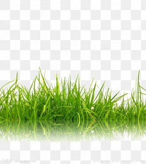 Green Grass Background Image - Stock Photography Green Shutterstock PNG