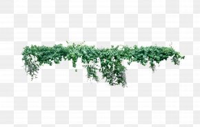 Creeper - Vine Plant Liana Tree PNG