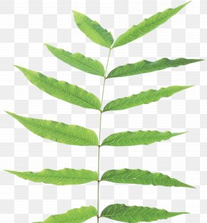 Green Leaf - Image File Formats Lossless Compression Raster Graphics PNG