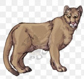 Mountain Lion Drawings - Cougar Lion Cat Felidae Leopard PNG