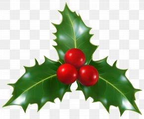 Christmas Holly Mistletoe Clip-Art Image - Mistletoe Christmas Common Holly Clip Art PNG