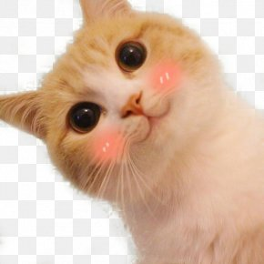Tilted Head Cats Cute Selling Spear Expression - Cat Cuteness Sticker Head Face PNG