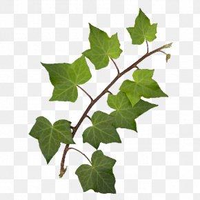 绿叶 - Leaf PhotoScape Clip Art PNG