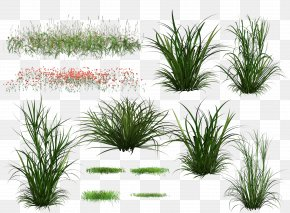 Creative Green Grass Background - Download Green PNG