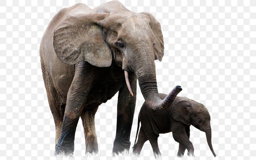 Lion African Forest Elephant Leopard Giraffe, PNG, 570x512px, Asian Elephant, African Elephant, African Forest Elephant, Animal, Animal Attacks Download Free