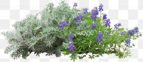 Shaped Flower Garden - Flower PNG