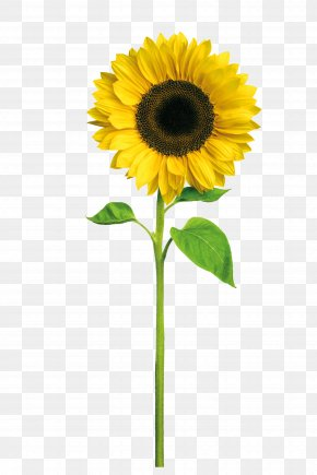 Sunflower - Birthday Wish Affinity Daughter Greeting Card PNG