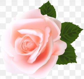 Rose Clip Art - Garden Roses Centifolia Roses Pink Clip Art PNG