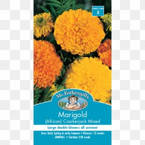 Flower - Mexican Marigold Seed Flower Calendula Officinalis Crop PNG