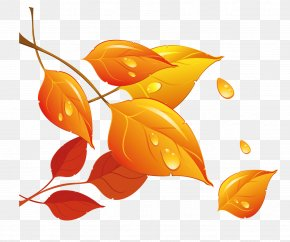 Transparent Fall Leaves Clipart - Autumn Leaf PNG