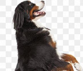 Flea - Bernese Mountain Dog Dog Breed Pet Cat Guard Dog PNG