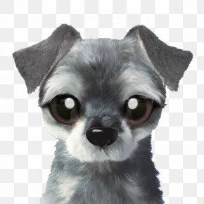 Grey Puppy - Chihuahua Chien-gris Puppy Dog Breed Toy Dog PNG