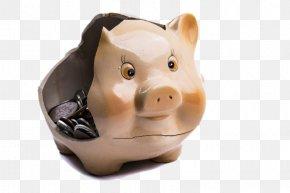 Ceramic Piggy Bank - Piggy Bank Domestic Pig Saving Investment PNG