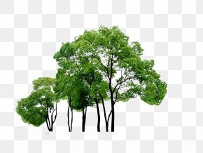Trees - Tree Download Computer File PNG