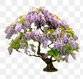 Tree - Bonsai Tree Ornamental Plant Japanese Wisteria Gardening PNG