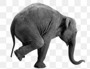 African Elephant - African Elephant Gray Matter: Why It's Good To Be Old! Elephant On Wheels Interim Ministry Network Inc PNG