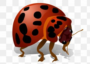 Beetle Bug - Beetle Art Color PNG