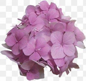 Cartoon Creative Decorative Floral Pattern Material - Flower Floral Design Clip Art PNG