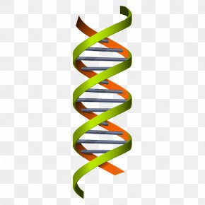 Medical Chemistry,Chemistry,science - Science Genetics Euclidean Vector DNA Illustration PNG