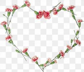 Carnations Vector - Floral Design Flower Clip Art PNG