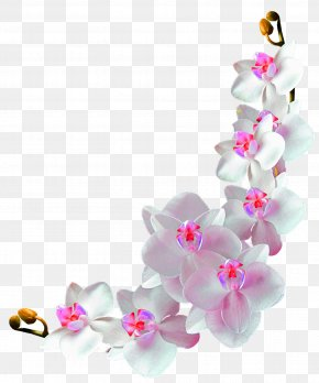 Flower Vine Decoration Logo Logo Community - Orchids Film Frame Photography Clip Art PNG