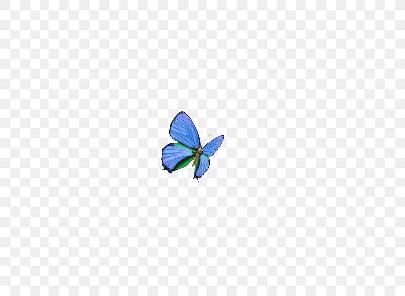 Butterfly Blue Wallpaper Png 600x600px Butterfly Blue