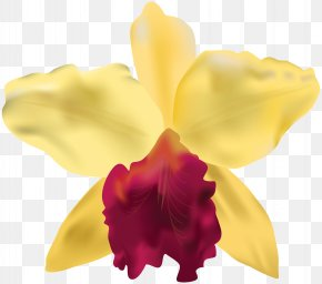 Yellow Orchid Clip Art Image - Clip Art PNG