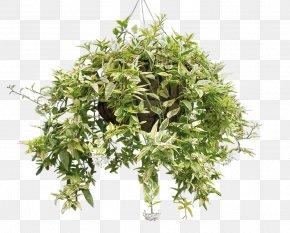 Plant - Houseplant Succulent Plant PNG