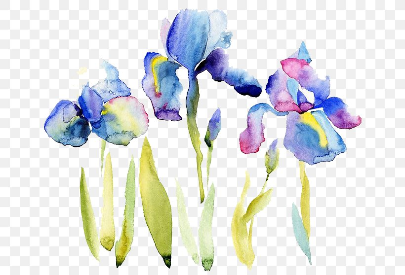 Watercolor Painting Drawing Illustration, PNG, 658x558px, Watercolor Flowers, Art, Cut Flowers, Drawing, Floral Design Download Free
