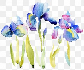 Watercolor Flowers - Watercolor Painting Drawing Illustration PNG