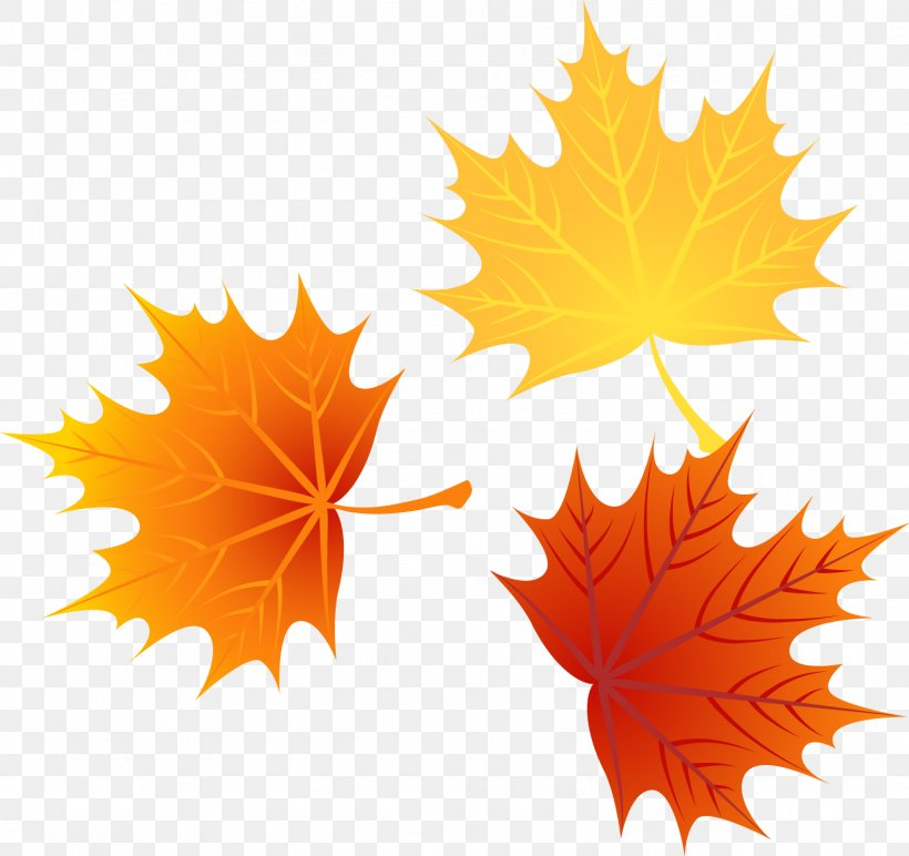 Leaf Autumn Leaves Euclidean Vector, PNG, 1579x1487px, Autumn, Cdr, Knowledge, Leaf, Lesson Download Free