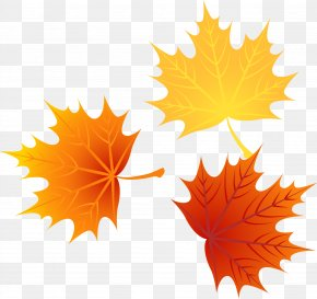 Vector Autumn Leaves 1 - Leaf Autumn Leaves Euclidean Vector PNG