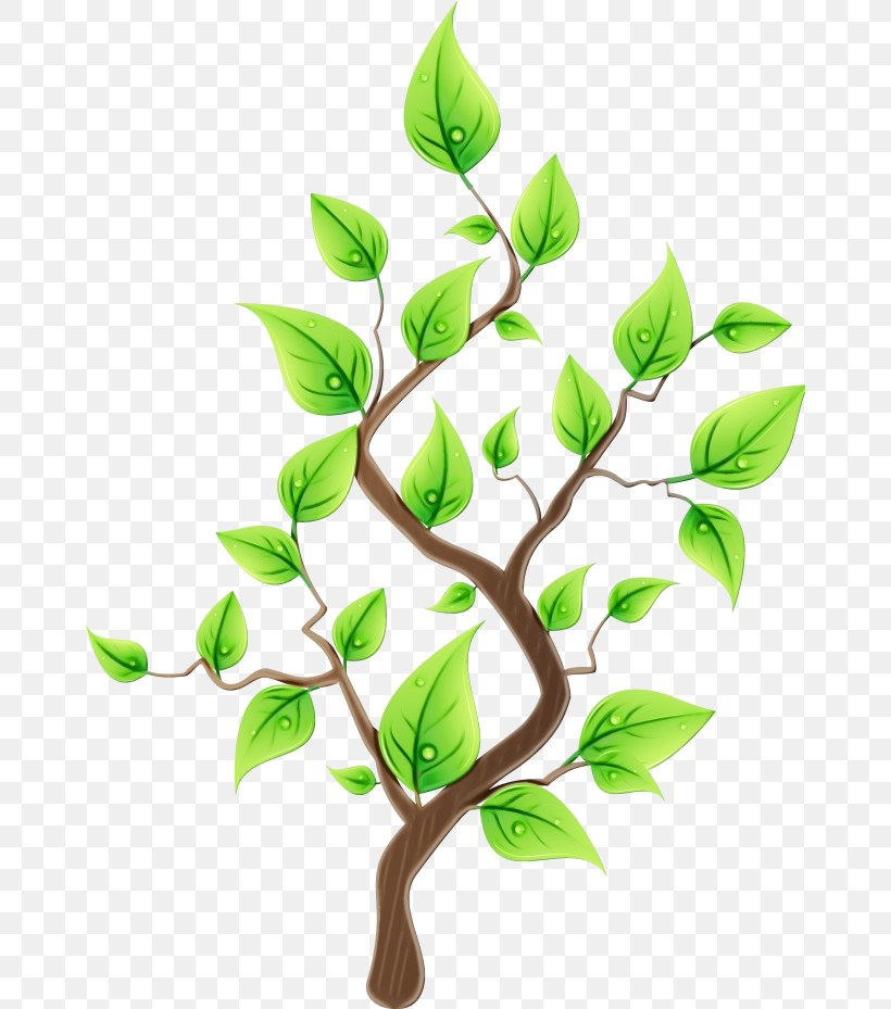 Branch Leaf Plant Flower Tree, PNG, 662x929px, Watercolor, Branch, Flower, Flowering Plant, Leaf Download Free