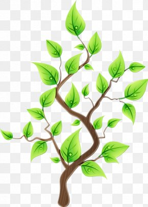Flowering Plant Woody Plant - Branch Leaf Plant Flower Tree PNG