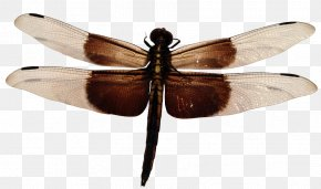 Dragonfly - Dragonfly Widow Skimmer PNG