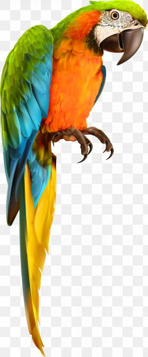 Parrot Bird Animal Vector Material PNG