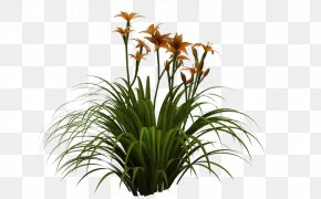 Lily - Flower Garden Anemophily Glume PNG