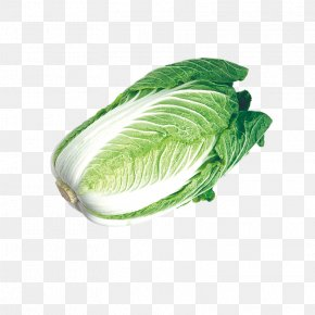 Fresh Ingredients Cabbage - Chinese Cabbage Napa Cabbage Umami Vegetable PNG