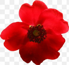 Flower - Red Flower Yandex Search Orange Yellow PNG