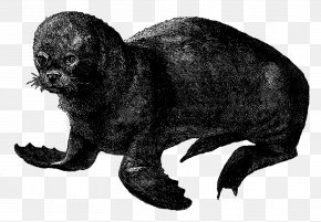 Sea Animals - Sea Lion Cat Pinniped PNG